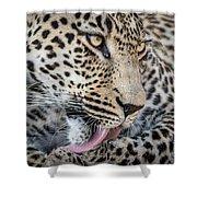 Portrait Of A Leopard Shower Curtain