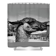 Portrait Of A Llama Mafia Leader Shower Curtain