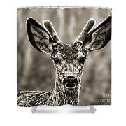 Portrait Of A Male Deer II Shower Curtain
