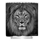 Portrait Of A Male Lion Black And White Version Shower Curtain