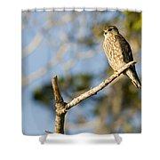 Portrait Of A Merlin Falco Columbarius Shower Curtain