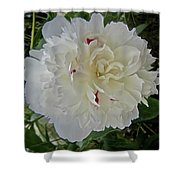 Portrait Of A Peony Shower Curtain