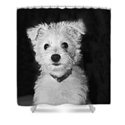 Portrait Of A Puppy In Black And White Shower Curtain