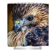Portrait Of A Red-tailed Hawk Shower Curtain
