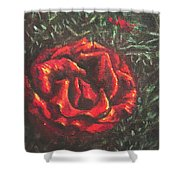 Portrait Of A Rose 6 Shower Curtain