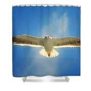 Portrait Of A Seagull Shower Curtain