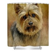Portrait Of A Silky Terrier Shower Curtain by Stephanie Calhoun