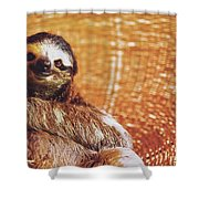 Portrait Of A Sloth Pet Looking In The Camera Shower Curtain
