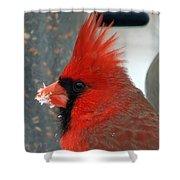 Portrait Of A Snowy Cardinal Shower Curtain