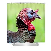 Portrait Of A Tom Turkey Shower Curtain