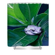 Portrait Of A Tree Frog Shower Curtain