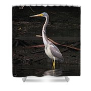 Portrait Of A Tri-colored Heron Shower Curtain