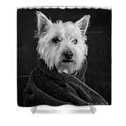 Portrait Of A Westie Dog Shower Curtain