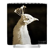Portrait Of A White Peacock Shower Curtain