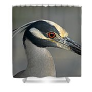 Portrait Of A Yellow Crowned Heron Shower Curtain
