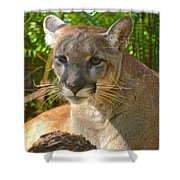 Portrait Of A Young Florida Panther Shower Curtain