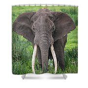 Portrait Of African Elephant Loxodonta Shower Curtain