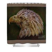 Portrait Of An Eagle Shower Curtain
