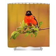 Portrait Of An Oriole Shower Curtain