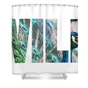 Portrait Of Beautiful Peacock With Open Tail Shower Curtain