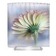 Portrait Of Gerbera Daisy Shower Curtain