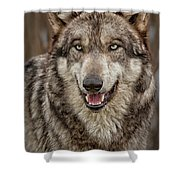 Portrait Of Gray Wolf Shower Curtain