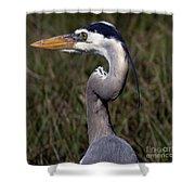Portrait Of Great Blue Heron Shower Curtain