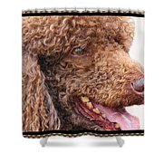 Portrait Of Guinness Shower Curtain