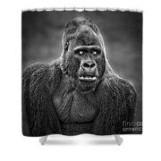 Portrait Of King Kongs Cousin IIi Shower Curtain