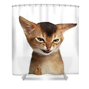 Portrait Of Kitten With Showing Middle Finger Shower Curtain by Sergey Taran