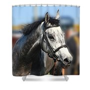 Portrait Of The Grey Race Horse Shower Curtain