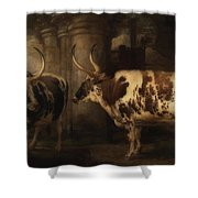 Portrait Of Two Oxen - The Property Of The Earl Of Powis Shower Curtain
