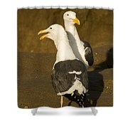 Portrait Of Two Seagulls On A Beach Shower Curtain