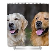 Portrait Of Two Young Beauty Dogs Shower Curtain