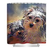 Portrait Of Yorkshire Terrier Puppy Dogs Shower Curtain