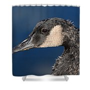Portrait Of Young Canada Goose Shower Curtain