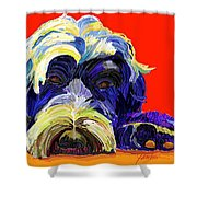 Portugese Water Dog 1 Shower Curtain