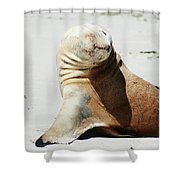 Poser Shower Curtain