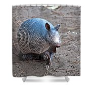 Posing Armadillo Shower Curtain