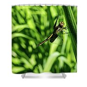 Posing Dragonfly 2 Shower Curtain