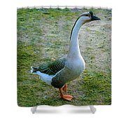Posing Goose Shower Curtain