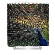 Posing Peacock Shower Curtain