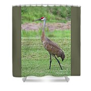 Posing Sandhill Shower Curtain