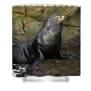 Posing Sea Lion Shower Curtain