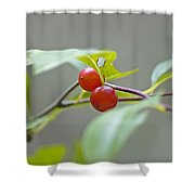 Possum Haw Berries Shower Curtain