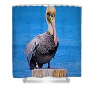 Posted Pelican Shower Curtain