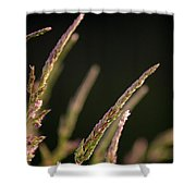 Poster Grass Shower Curtain