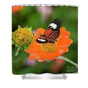 Postman Butterfly Shower Curtain