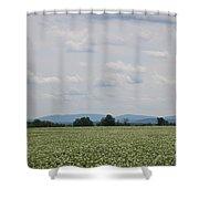 Potato Blossoms In Corinna Maine Shower Curtain