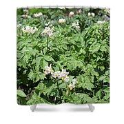 Potato Flower Agriculture Spring Scene Shower Curtain